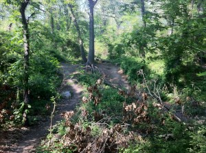 "A ""More Difficult"" mountain bike trail in Cunningham Park"