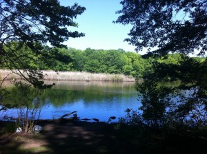 Wolfe's Pond Park North