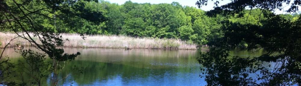 Wolfe's Pond Park North